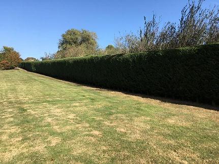 Cathy hedge.jpg