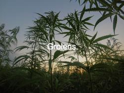 Grolens