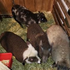 2019 Lambs