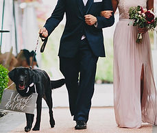 pet sitter wedding day
