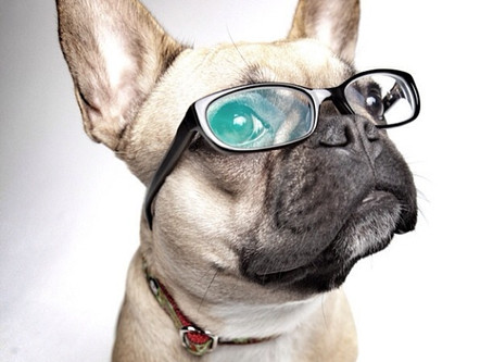 FURR YOUR INFORMATION— HOW DOGS SEE THE WORLD