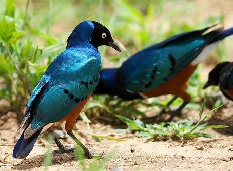"""BIRDS OF TANZANIA, AFRICA"" WAS A GREAT SUCCESS!"