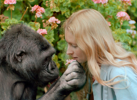 REMEMBERING KOKO— THE GORILLA WHO MADE US TAKE A SECOND LOOK