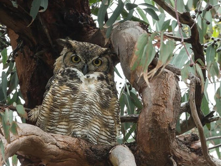 NATURE WALK: SOMETHING TO HOOT ABOUT