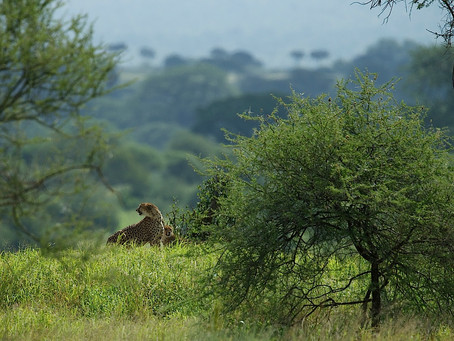 WANT TO LEARN MORE ABOUT THE WILDLIFE OF TANZANIA?