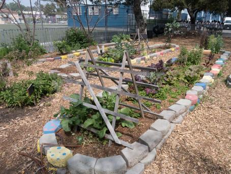 FARM-TO-SCHOOL PROFILE: FAVA BEANS