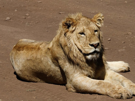 OUT OF AFRICA: ANIMAL RESCUE AND REHABILITATION