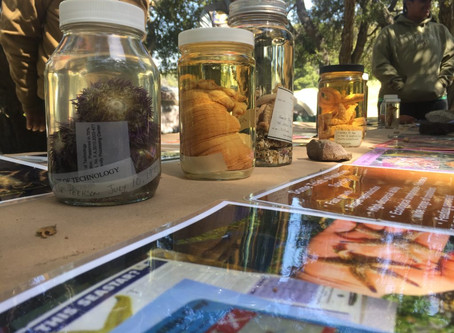 FORAGING, FIELD ECOLOGY AND FRIENDSHIP— A WEEKEND WITH TOPANGA CANYON DOCENTS