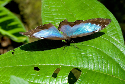11 ANIMALS THAT SHIMMER LIKE A RAINBOW