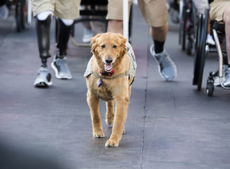 SEPTEMBER GOES TO THE DOGS—CLOSING OFF NATIONAL SERVICE DOG MONTH!