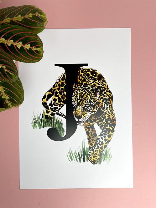 A3 J for Jaguar