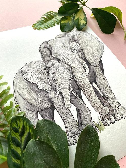 Elephant Cuddles