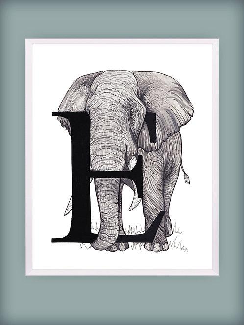 Elephant 'E'