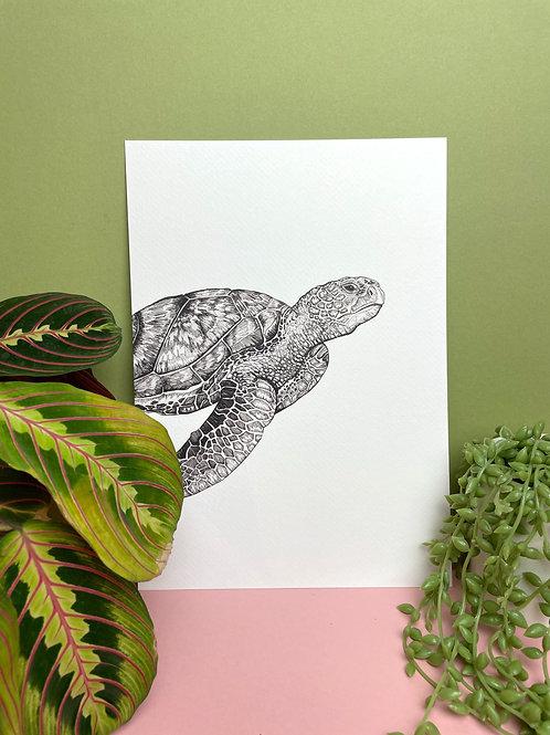 A4 Black & White Mr.Turtle