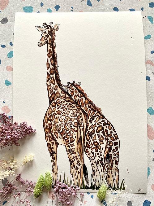 Giraffe Cuddles