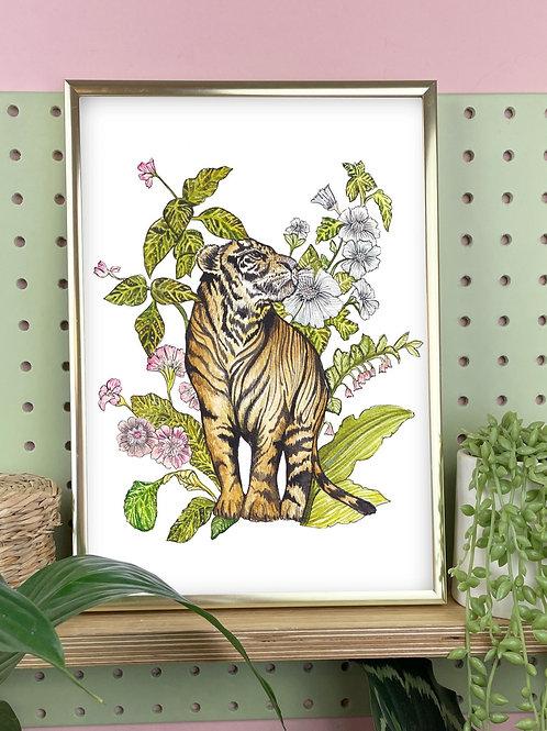 Jungle Cat