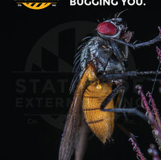 Statewide Exterminating Ad