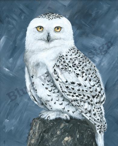 Snowy Owl _ Blue Wolf Design