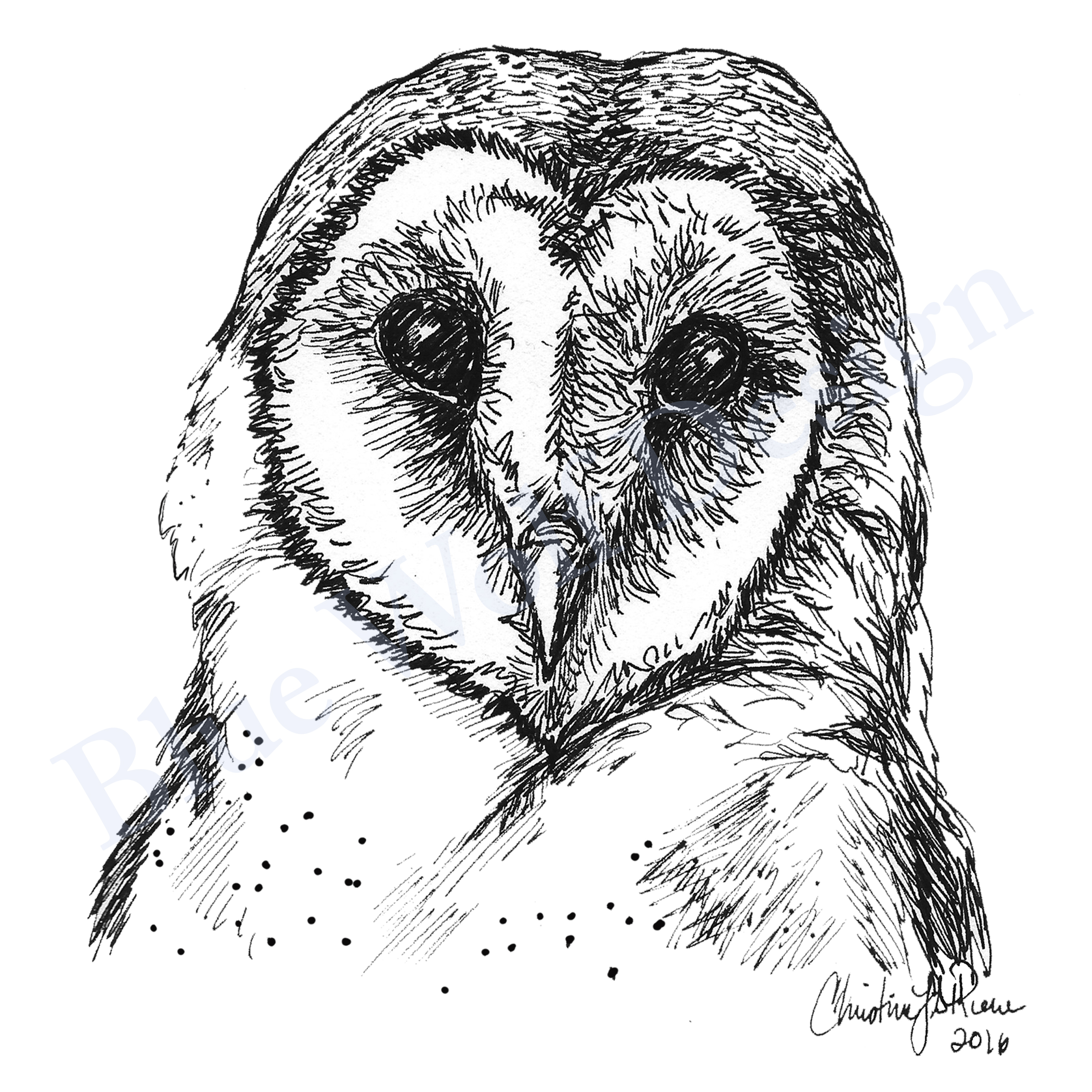 Barn Owl _ Blue Wolf Design