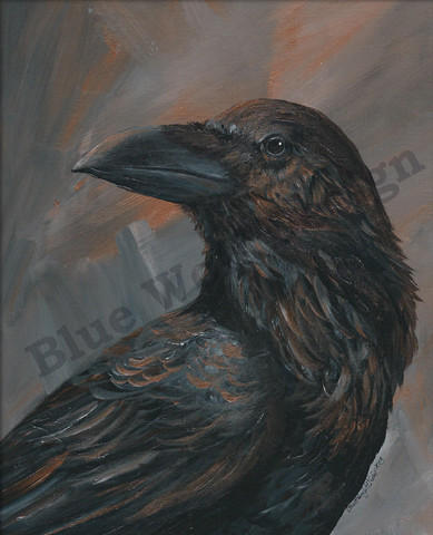 Raven _ Blue Wolf Design