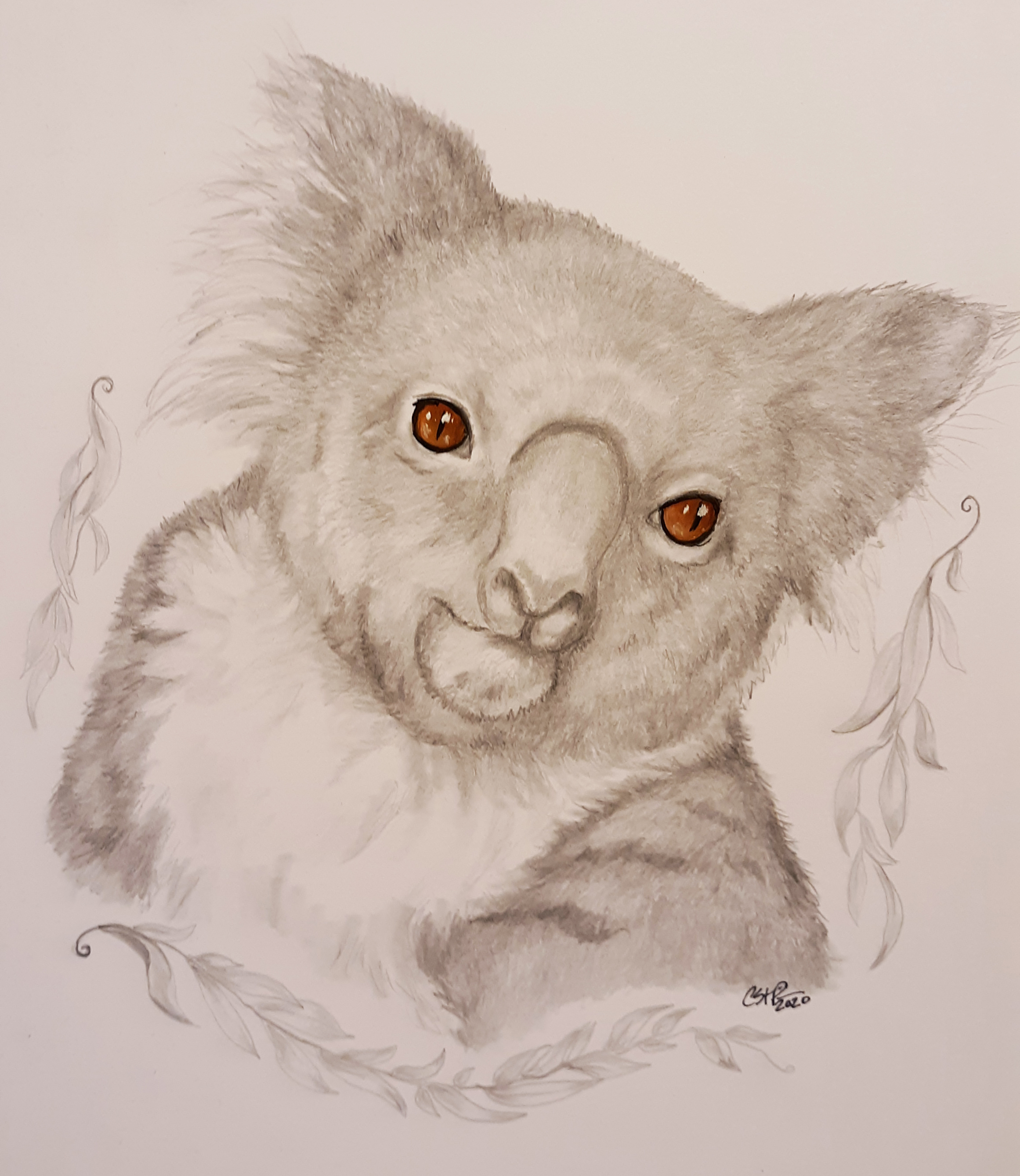 Koala/BlueWolfDesign