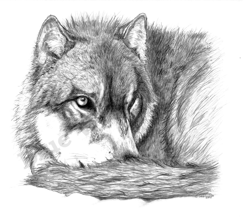 Wolf _ Blue Wolf Design