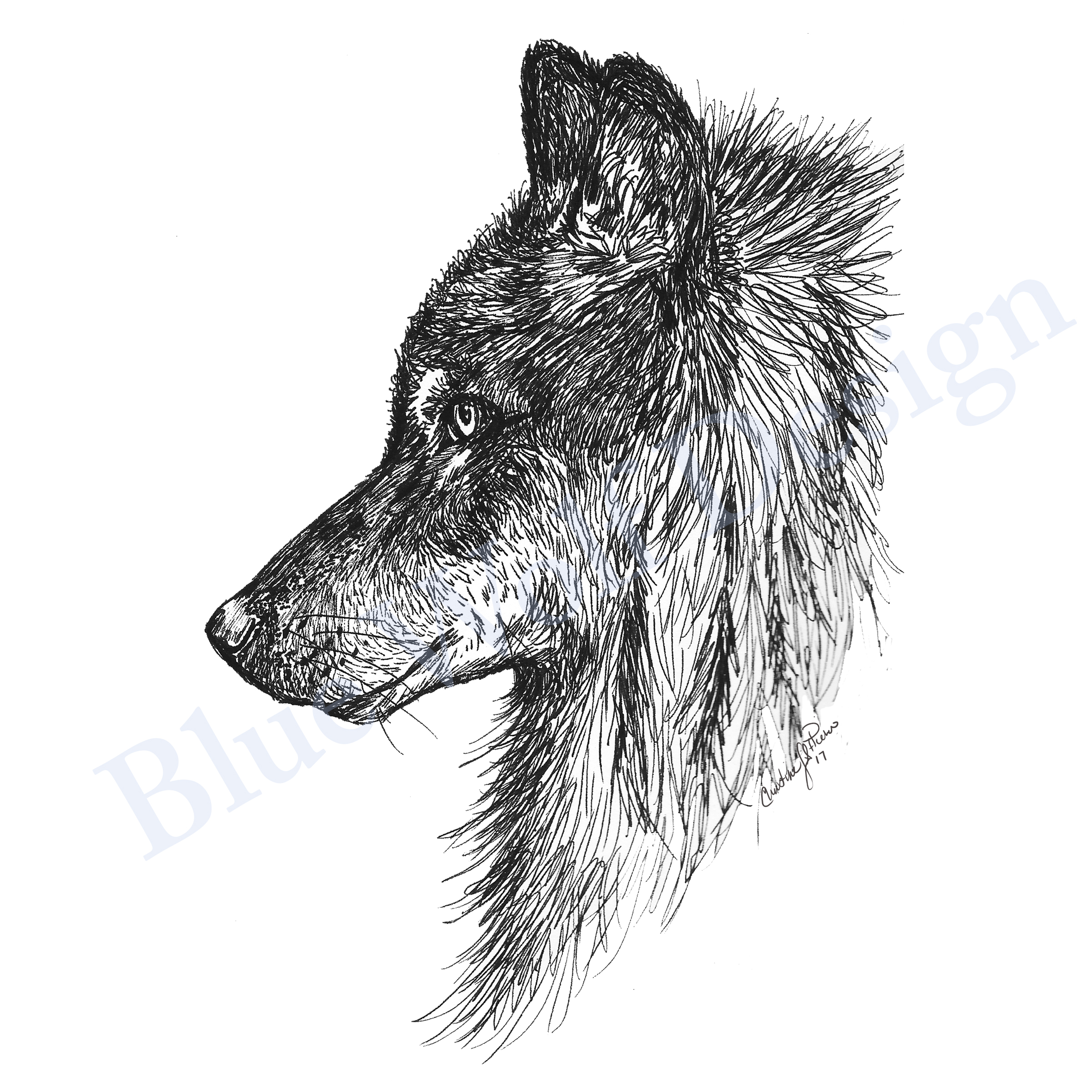 Wolf Gaze_ Blue Wolf Design