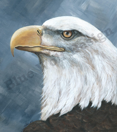 Bald Eagle _ Blue Wolf Design