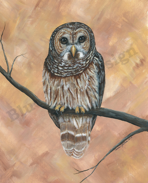 Barred Owl _ Blue Wolf Design