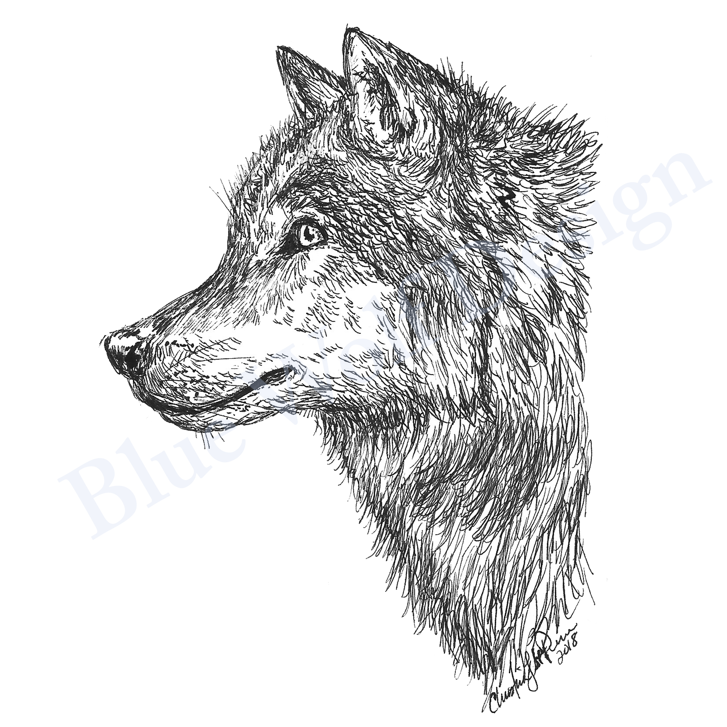 Curious Wolf _ Blue Wolf Design
