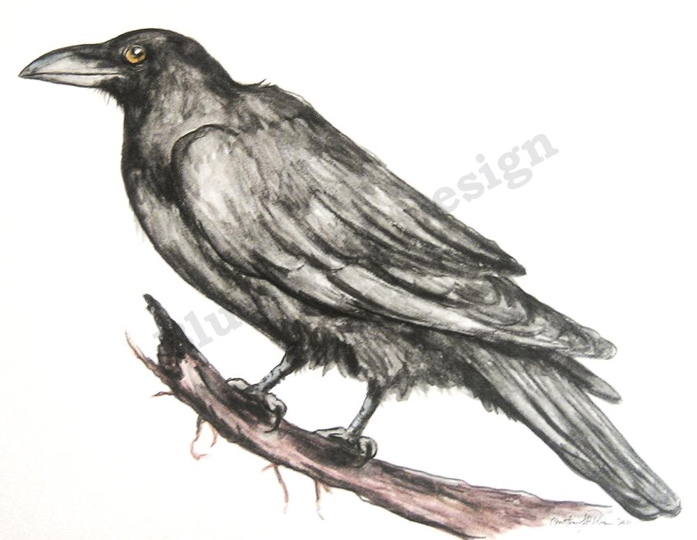 Raven_ Blue Wolf Design