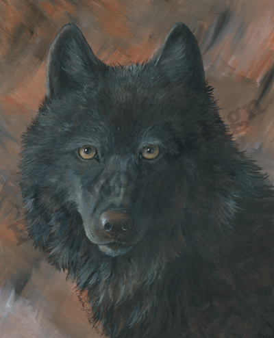 Black Wolf_ Blue Wolf Design