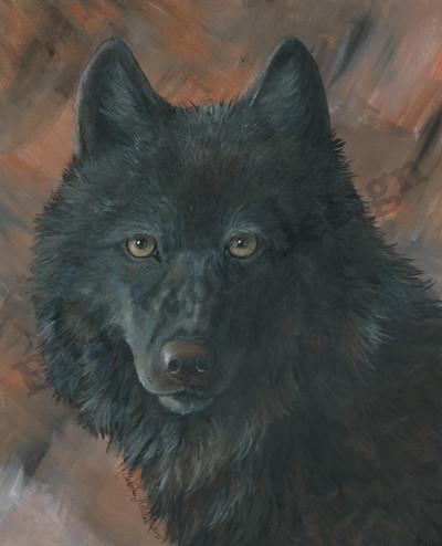 Black Wolf _ Blue Wolf Design