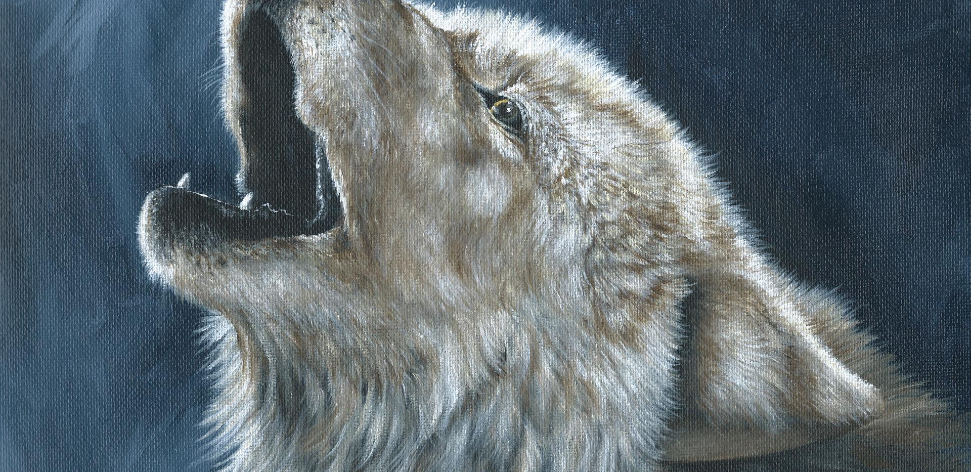 Arctic Wolf _ Blue Wolf Design