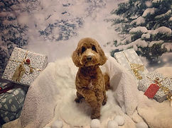 Teddy christmas 3.jpg