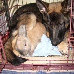 Everyone needs a snuggle bunny!