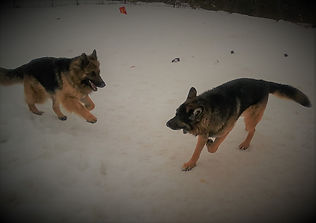 Tazer and Breeze Playing