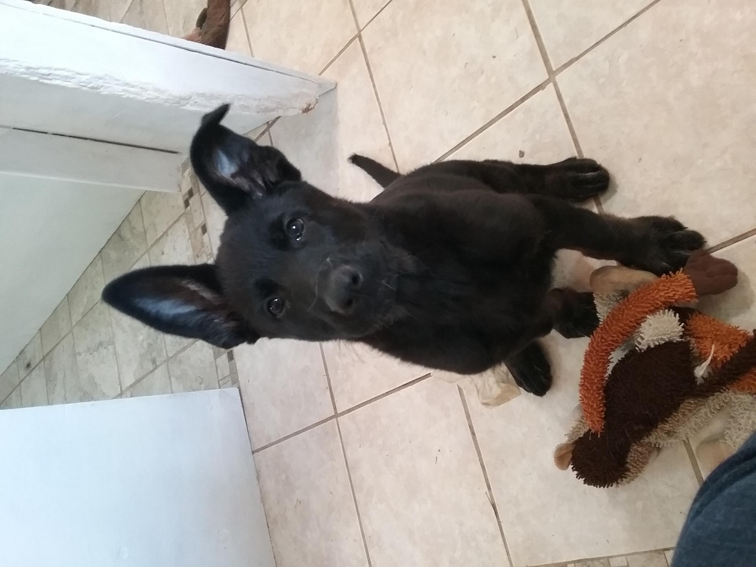 Zeuss Puppy 3.jpg
