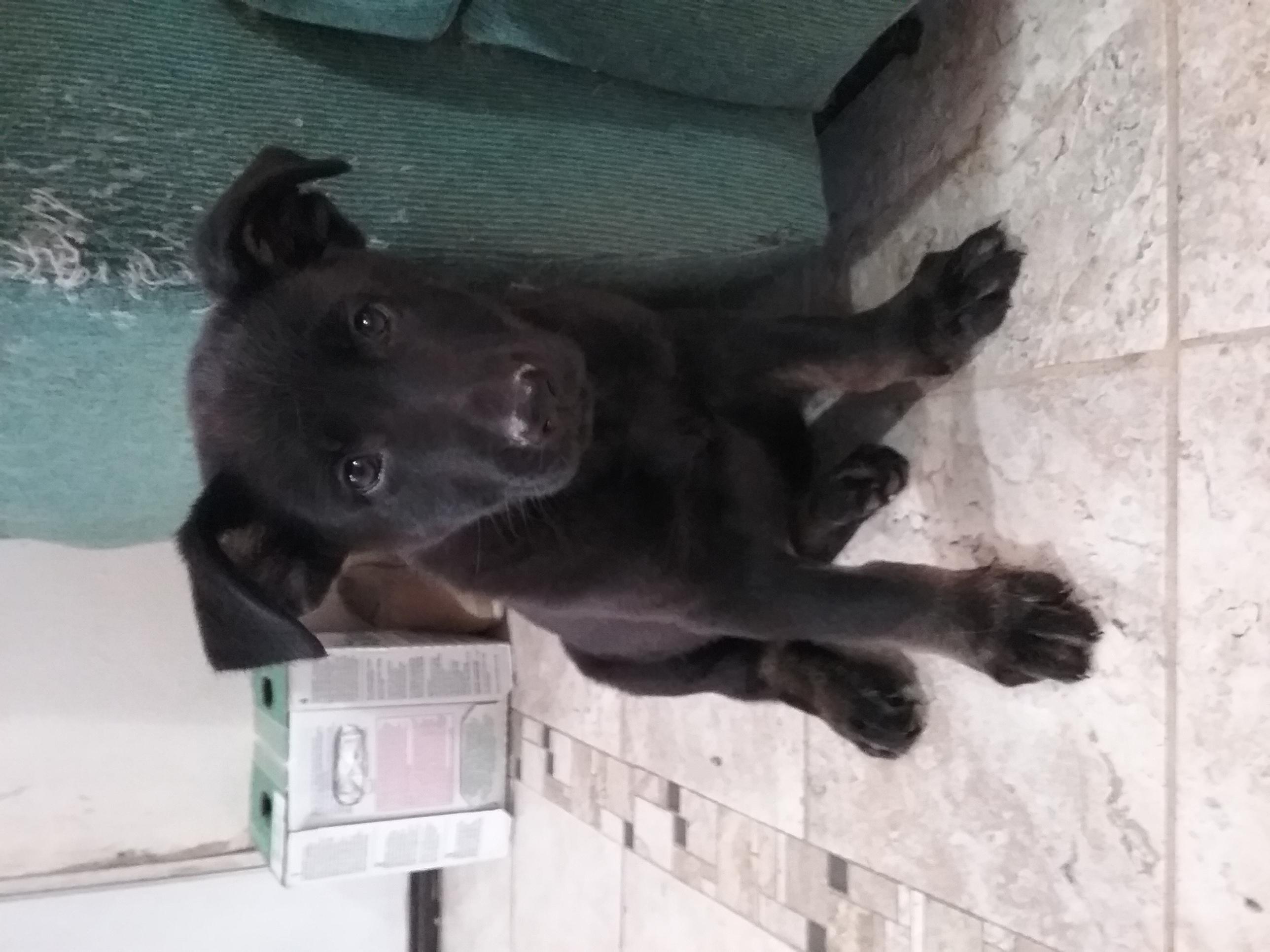 Zeuss Puppy 1.jpg