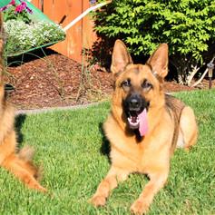 Finn and Bella in summer