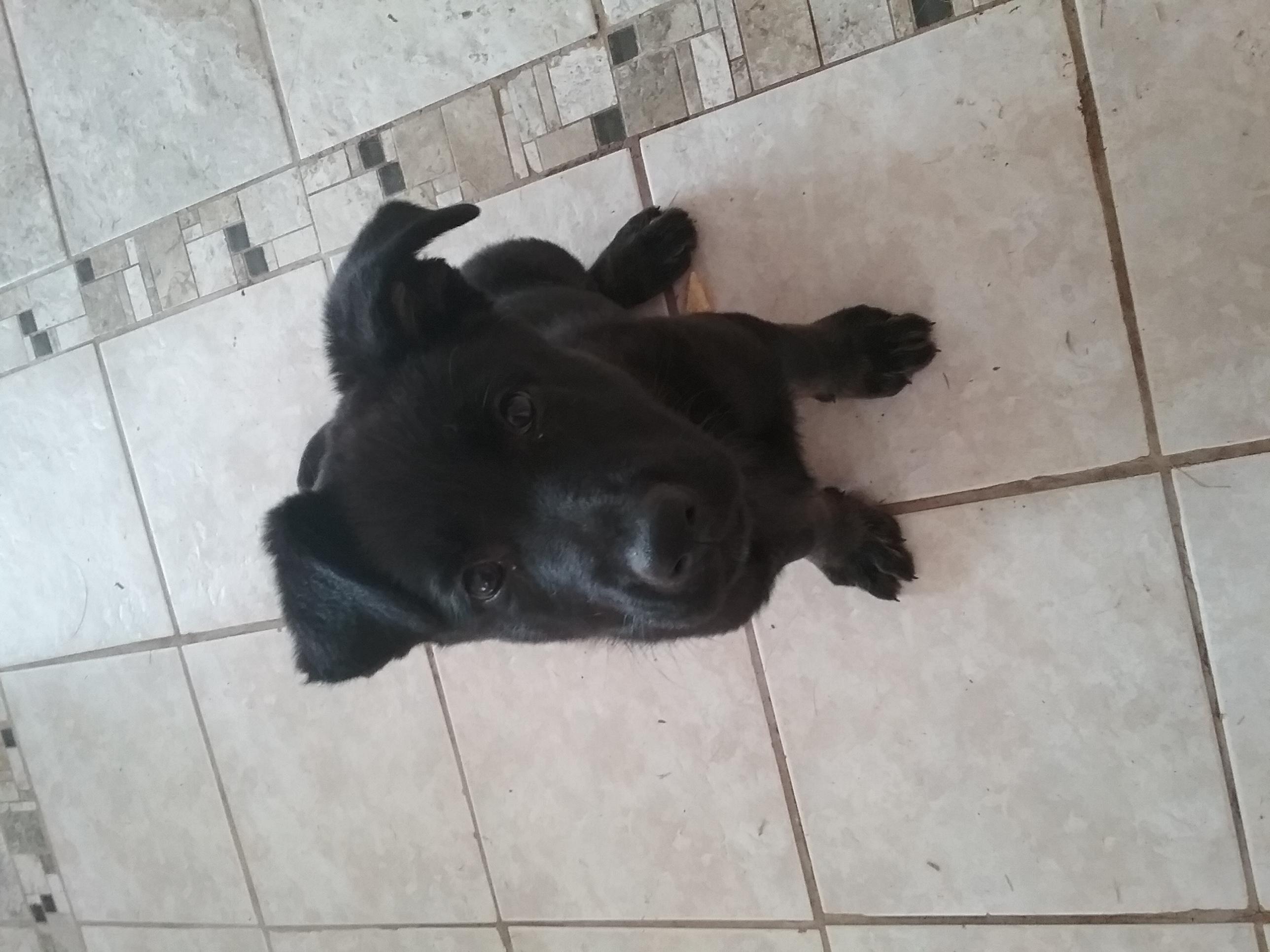 Zeuss Puppy 2.jpg