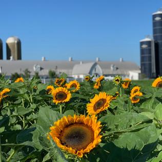Farm Photo.jpeg