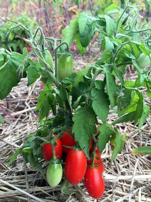 Hardin's Miniature Tomato