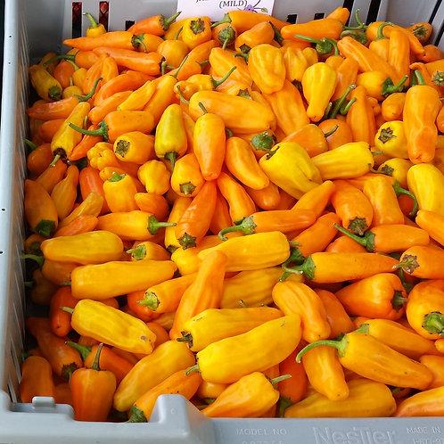Orange Jalapeno Pepper