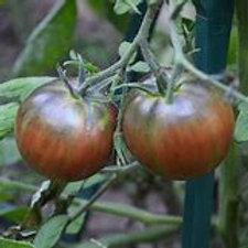 Russian Cossack Tomato