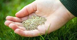 seed-sod-og.jpg