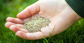 grass seed near me windsor.jpg