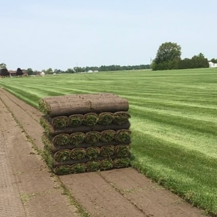 Field Fresh Sod