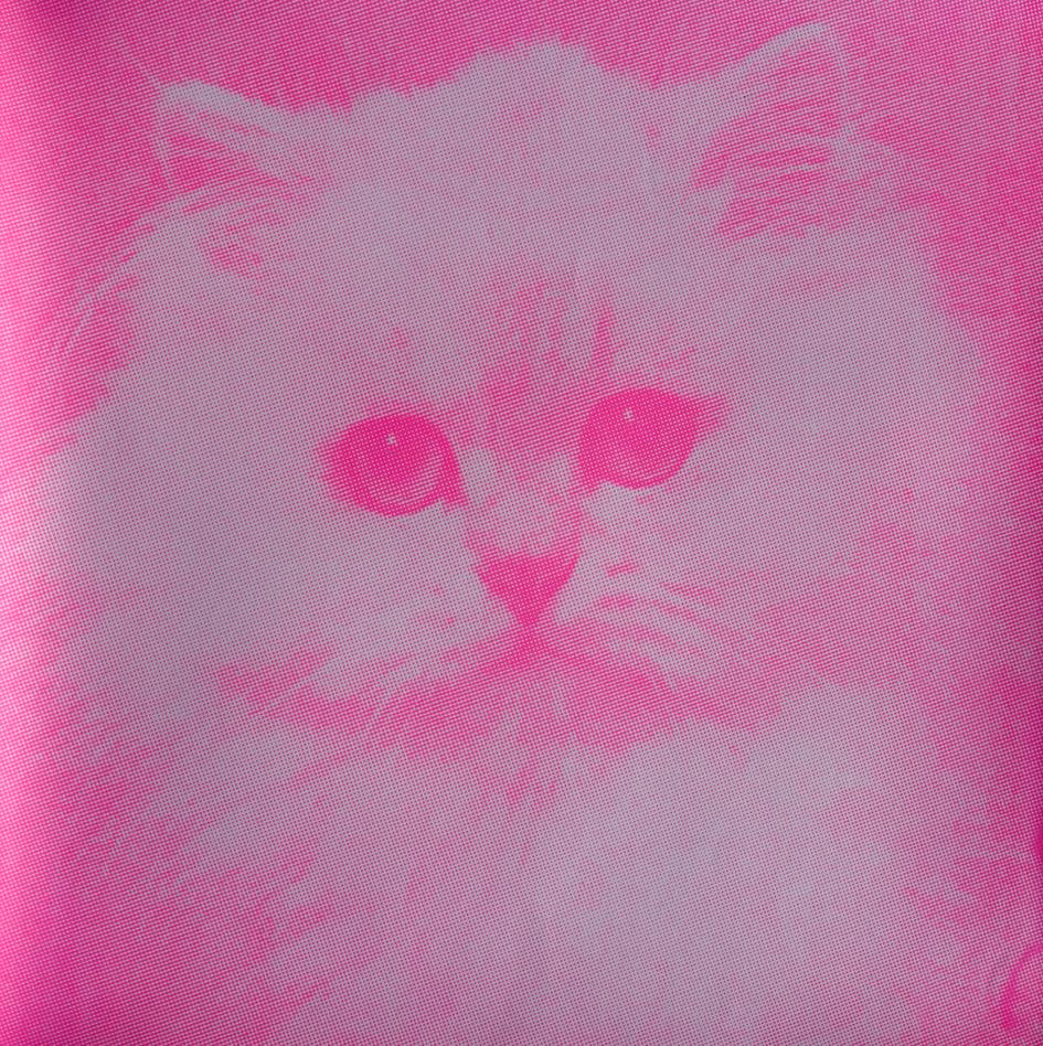 BLOWFIELDS CAT