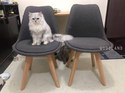 TALORE 多色餐椅